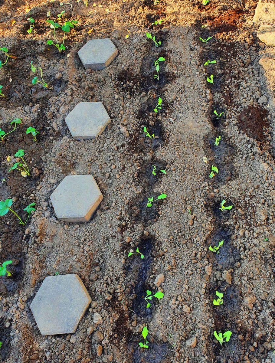 Unsere ersten Gemüsepflanzen. Mal sehen, was draus wird. Foto: Maike Steuer