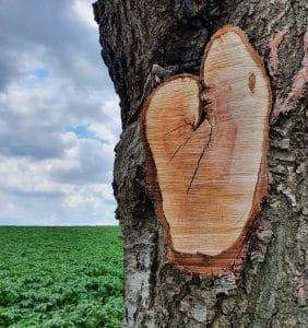 Ein Herz in der Natur, Foto: Maike Steuer
